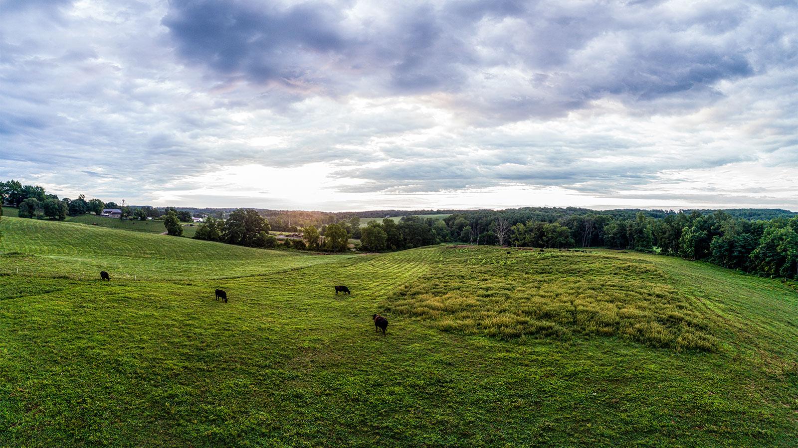 Roseda Farm Pasture at Dawn